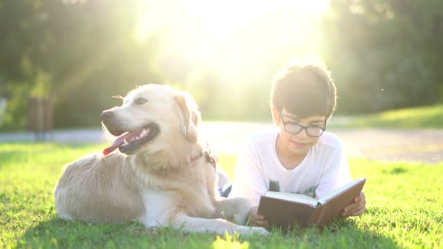 schoolboy reading book with her dog - lying down stock videos & royalty-free footage