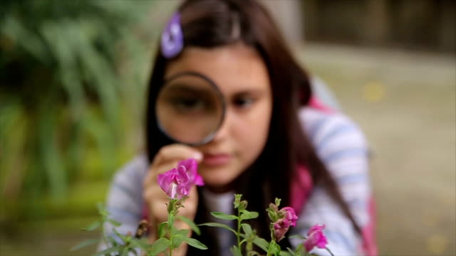 schoolgirl examining flower  with magnifying glass - curiosity stock videos & royalty-free footage