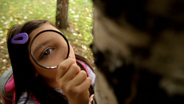 schoolgirl watching a  little bugs on a tree with a magnifying glass - schoolgirl stock videos & royalty-free footage
