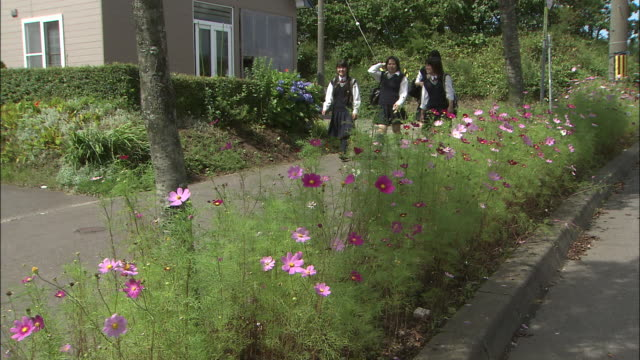 Schoolgirls walk along a road lined with cosmos flowers.