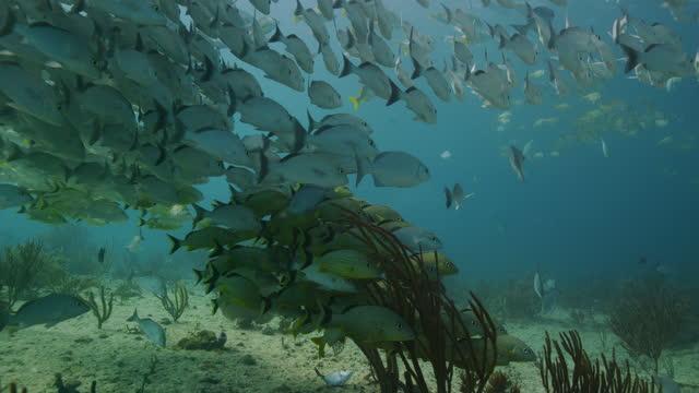 vídeos y material grabado en eventos de stock de schooling fish over tropical reef - playa del carmen