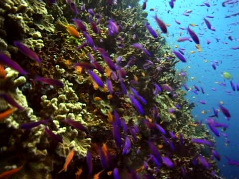 schools of fish around a reef - tierisches exoskelett stock-videos und b-roll-filmmaterial