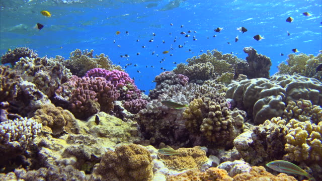 Schools of fish on beautiful coral reef at Red Sea