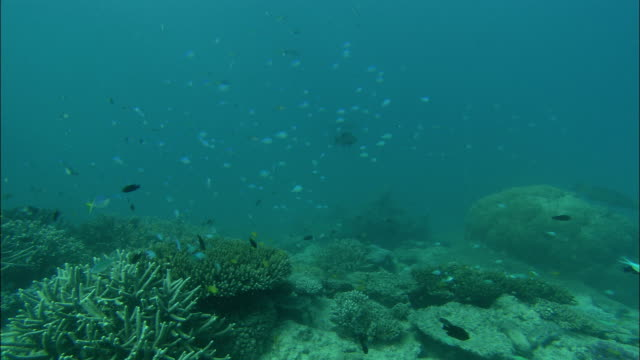 schools of fish swim over a variety of corals. - reef stock videos & royalty-free footage