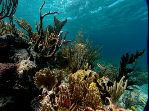 schools of fish swim over aquatic plants and a coral reef. - history点の映像素材/bロール