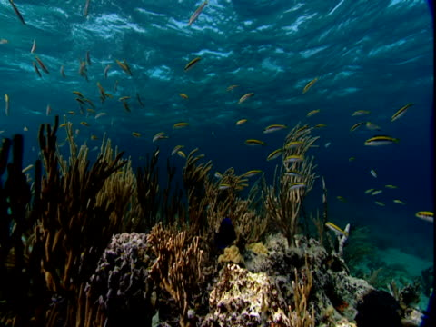 schools of fish swim over corals near the surface of the ocean. - history点の映像素材/bロール