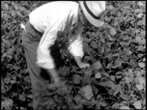science and agriculture (the soybean) - 2 of 10 - see other clips from this shoot 2413 stock videos & royalty-free footage