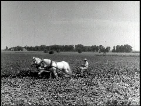 science and agriculture (the soybean) - 5 of 10 - prelinger archive stock-videos und b-roll-filmmaterial