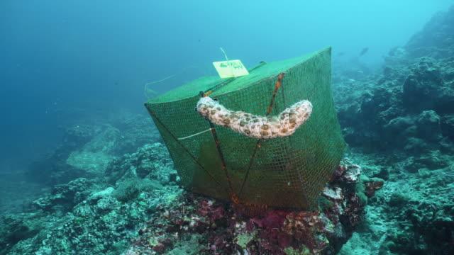 vídeos de stock e filmes b-roll de scientific environmental research marine biology underwater laboratory - acidificação dos oceanos