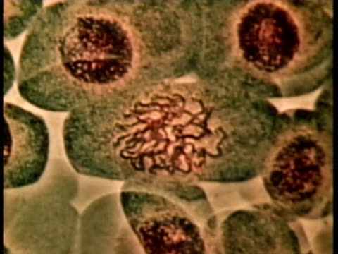 1976 scientific micrograph of genetic cell division / united states / audio  - 染色体点の映像素材/bロール