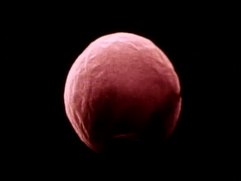 1976 scientific micrograph of unfertilised human egg / united states / audio - scientific micrograph stock videos and b-roll footage