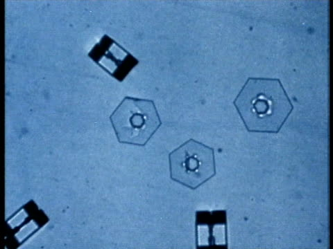 1975 scientific micrograph showing deposit of water vapor on ice surface / united states / audio - scientific micrograph stock videos and b-roll footage