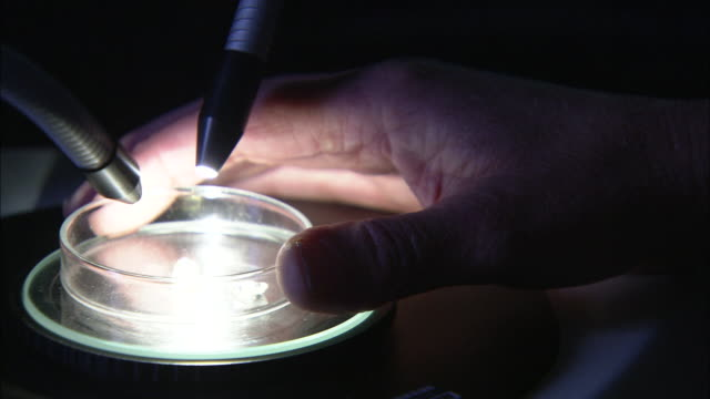 a scientist adjusts a petri dish under a microscope at a research laboratory. - piastra petri video stock e b–roll