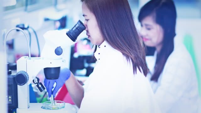 Scientist analyse plant disease with stereo microscope