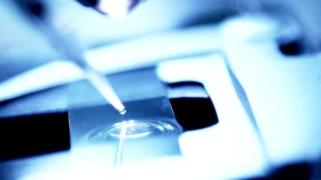 esperimento scienziato e bio laboratorio, slow motion - vetrino per microscopio video stock e b–roll