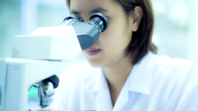 stem research