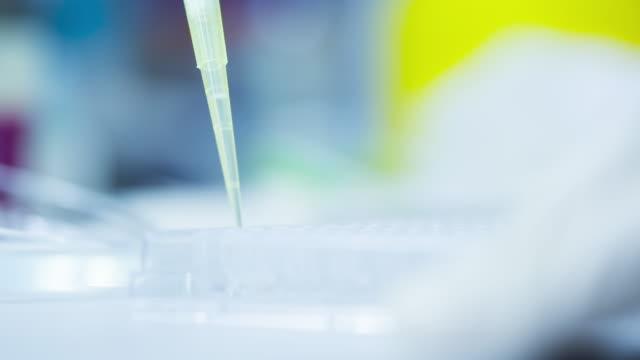 wissenschaftler labor experimentieren und bio - pipette stock-videos und b-roll-filmmaterial