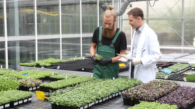 vídeos y material grabado en eventos de stock de científico y del granjero en invernadero - oficio agrícola