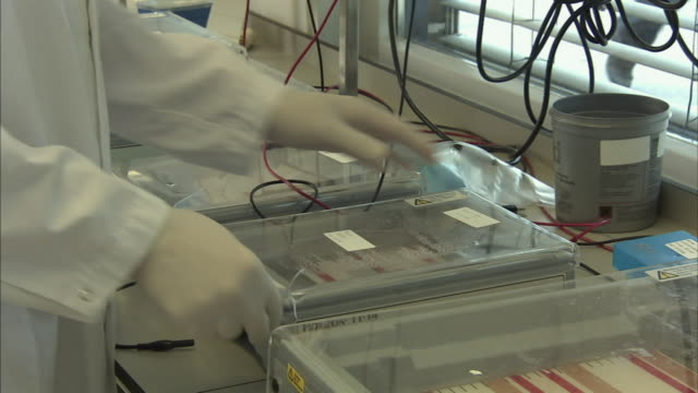 cu scientist checking lab experiment, boxmeer, netherlands - biochemistry stock videos & royalty-free footage