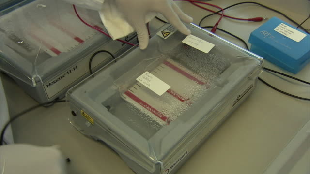 cu scientist checking lab experiment, boxmeer, netherlands - boxmeer video stock e b–roll