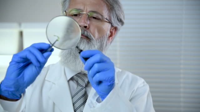 scientist checking quality of broccoli - magnifying glass stock videos & royalty-free footage