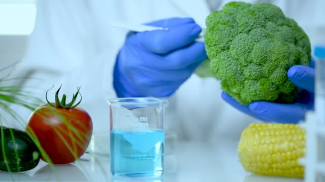 vídeos y material grabado en eventos de stock de científico verificando la calidad del brócoli - explorar nuevo territorio
