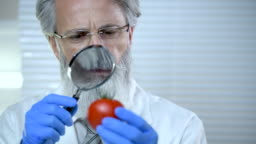 Scientist checking quality of tomato
