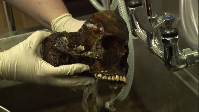 a scientist cleans a partial human skull in a large metal sink. - bone stock videos & royalty-free footage
