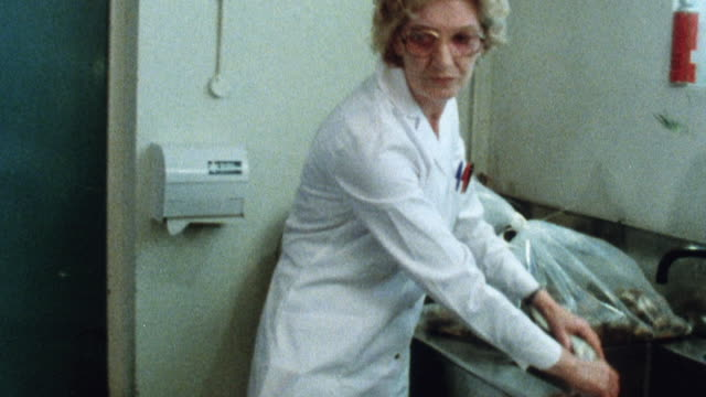 1981 MONTAGE Scientist dissecting and testing fish for radioactivity in a laboratory / United Kingdom