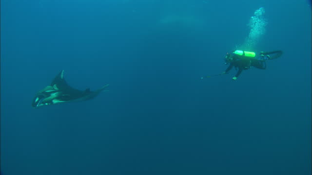 Scientist Diver taking skin sample from Manta, W. Mexico