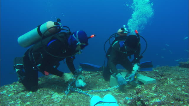 Scientist divers, rigging acoustic receiver on sea bed, Mexico
