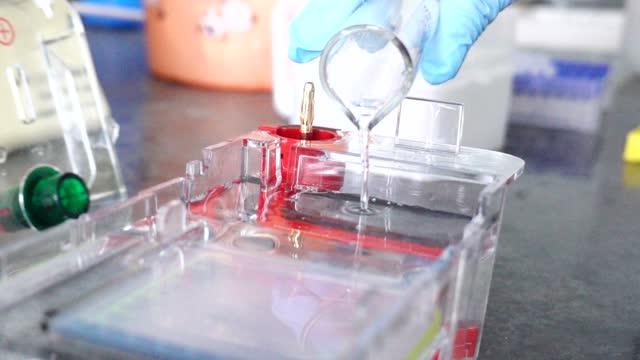 vidéos et rushes de scientist doing agarose gel experiment in slow motion - carcinome