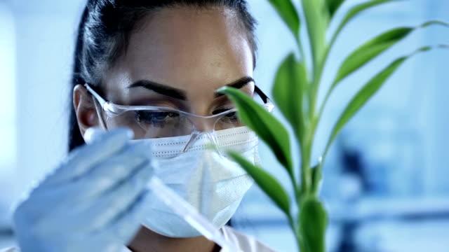 Ein Wissenschaftler machen ein experiment auf Pflanzen