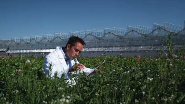 vídeos de stock, filmes e b-roll de ms tu scientist examining flora at a greenhouse / salem, utah, usa. - só um homem maduro