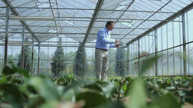 scientist examining flora in a greenhouse - endast en medelålders man bildbanksvideor och videomaterial från bakom kulisserna