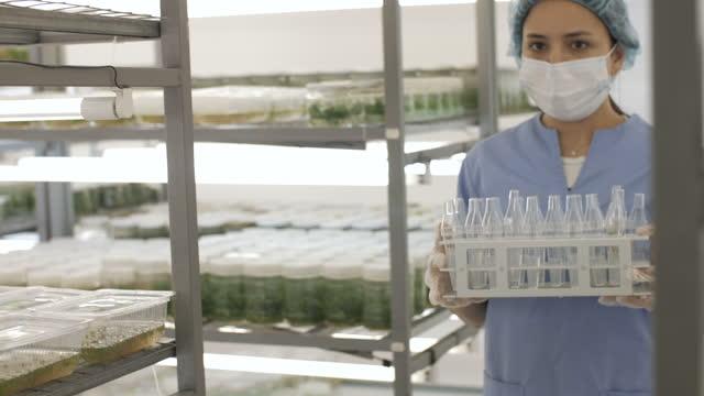 wissenschaftler untersucht in-vitro-pflanzen im botanischen labor. - künstliche befruchtung medizinischer vorgang stock-videos und b-roll-filmmaterial