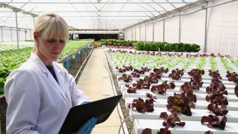 vidéos et rushes de ws pan scientist examining produce in hydroponic lettuce farm greenhouse / richmond, virginia, united states - culture hydroponique