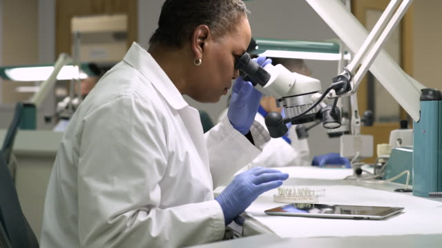 scientist examining samples through a microscope - microscope stock videos and b-roll footage