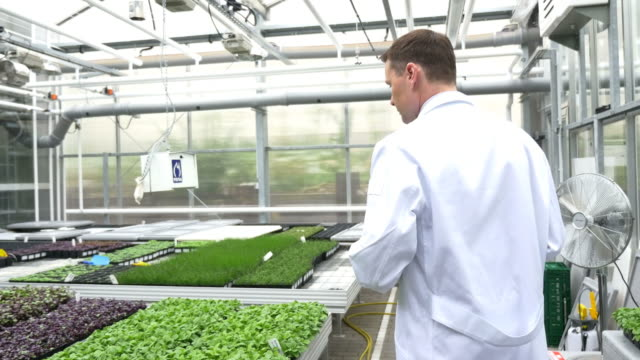 Scientist examining saplings in greenhouse