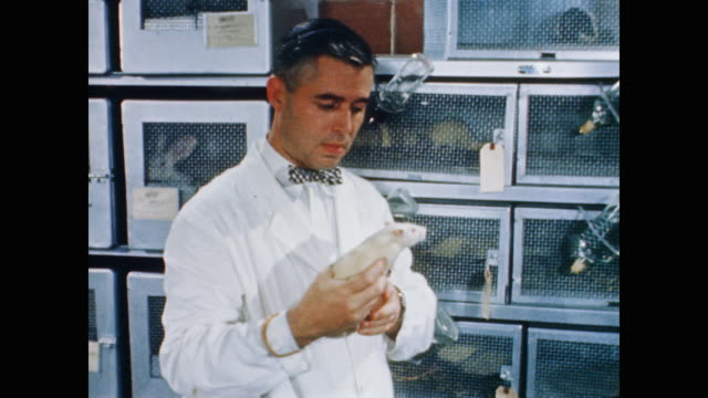 a nasa scientist handles a chinchilla and a rat inside the laboratory of the mercury project's animal flight research program - 1958年点の映像素材/bロール