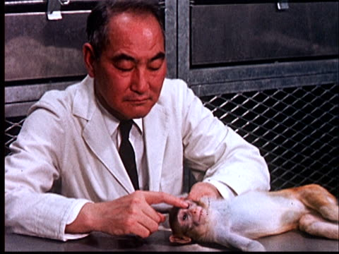1960 FILM MONTAGE MS scientist holding monkey on table/ CU hand poking sedated monkey in eye/ AUDIO
