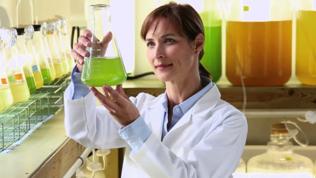 ms scientist in biology tech laboratory inspecting liquid in beaker / eastville, virginia, united states - eastville stock videos and b-roll footage