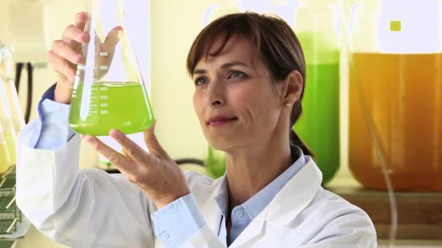 cu pan scientist in biology tech laboratory inspecting liquid in beaker / eastville, virginia, united states - algae fuel video stock e b–roll