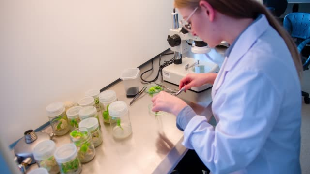 Scientist in biotechnology laboratory