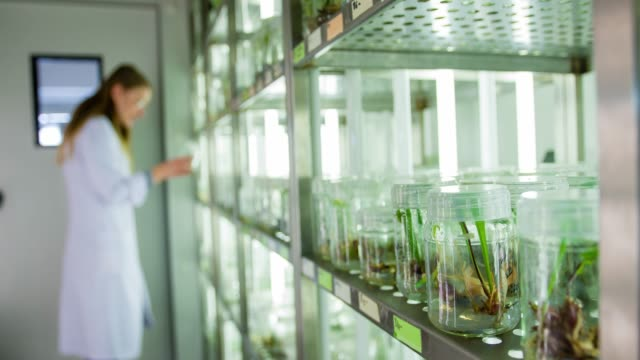 scientist in biotechnology laboratory - agriculture stock videos & royalty-free footage