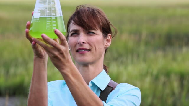 ms tu scientist in tidal marsh inspecting liquid in beaker / eastville, virginia, united states - becher video stock e b–roll