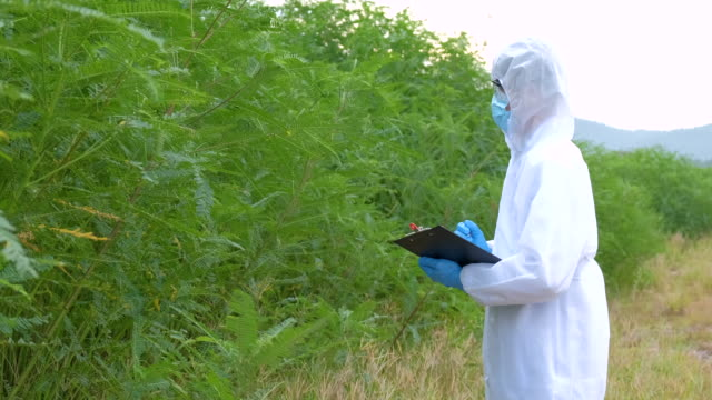 vídeos de stock, filmes e b-roll de scientist inspecting inspecting foliage in the forest - vanguardista