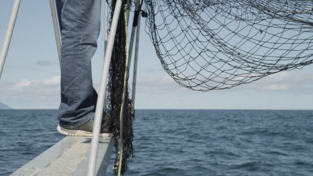 """scientist looks out for leatherback turtles on boat, canada - """"bbc natural history"""" stock videos & royalty-free footage"""