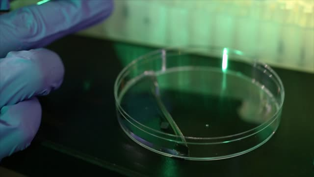 vídeos de stock, filmes e b-roll de scientist picks up small object with tweezers in bio technology lab - bioquímica