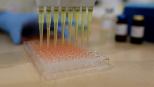vídeos de stock e filmes b-roll de scientist pipetting liquids for research - amostra médica